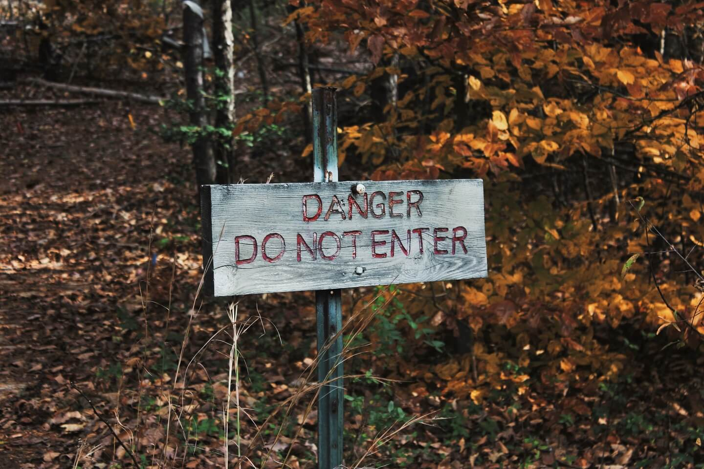 "A wooden sign in the woods that says, ""Danger Do Not Enter""."