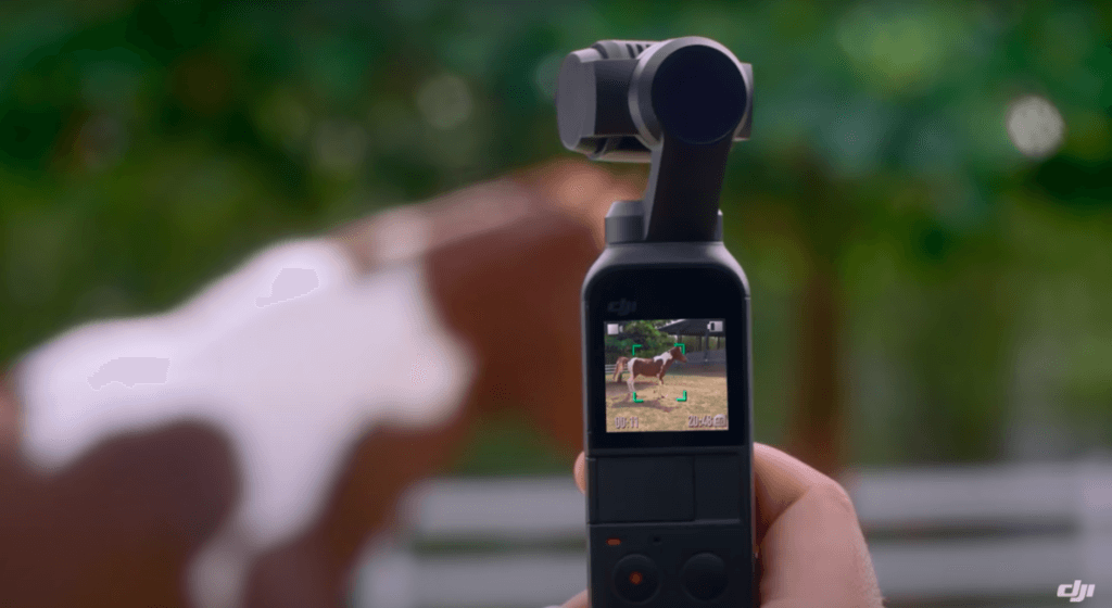 A hand holding the Osmo Pocket and focusing on a horse in the frame.